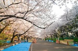 上野公園にあるお花見スポット