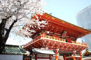 髄神門の横には大きな桜の木が満開の様子
