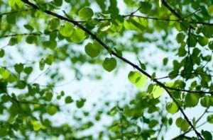 新緑の画像