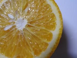 オレンジの輪切りイメージ