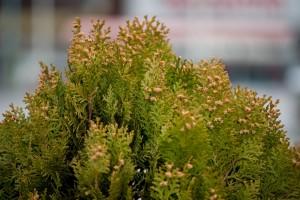 花粉症シーズン